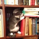 Cat in stacks